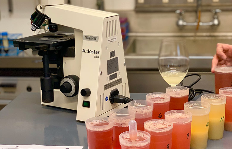 Vineyard Juice Samples in a lab - help decide when to harvest