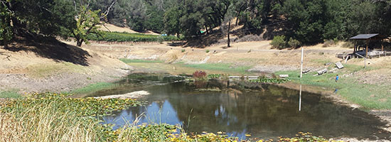Ridgeline Vineyard Pond