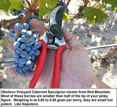 Obelisco grape cluster
