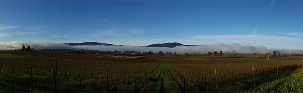 Silverado Trail vineyard in winter