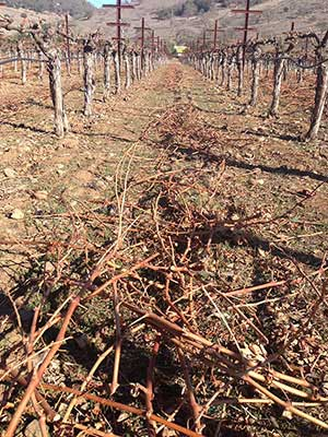 a large pile of pruned vines