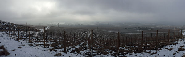 Longwinds Vineyard  WA snow cover