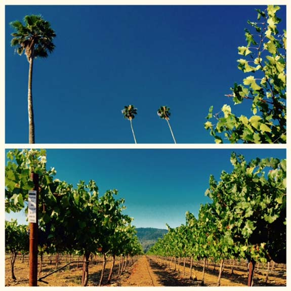 Three Palms Vineyard Focus
