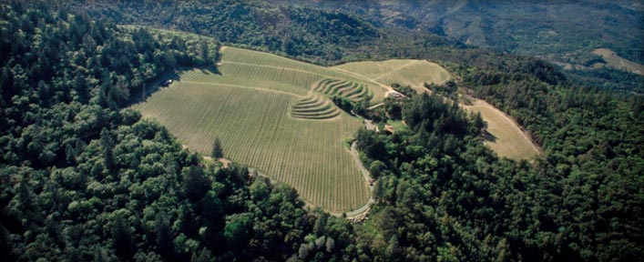 Candlestick Ridge Vineyard