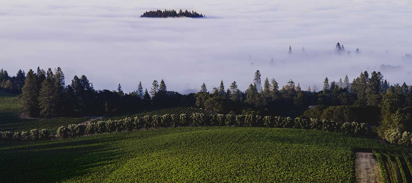 Duckhorn Stout Vineyard Feature Image
