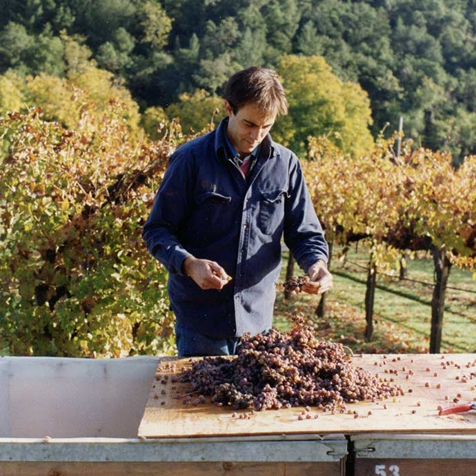Alex Ryan on the sorting table at Duckhorn