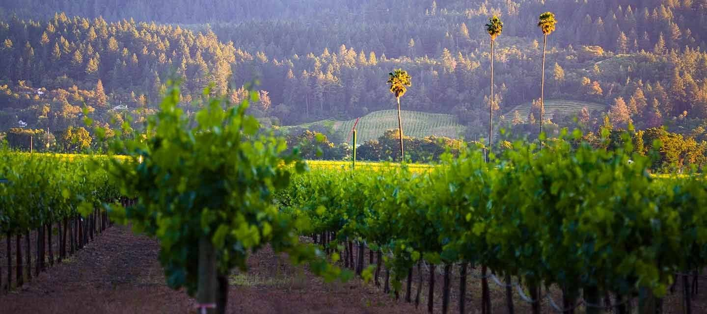 Duckhorn Three Palms Vineyard Feature Image