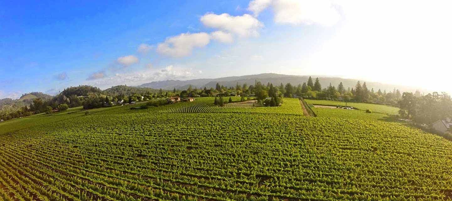 Duckhorn Patzimaro Vineyard Feature Image