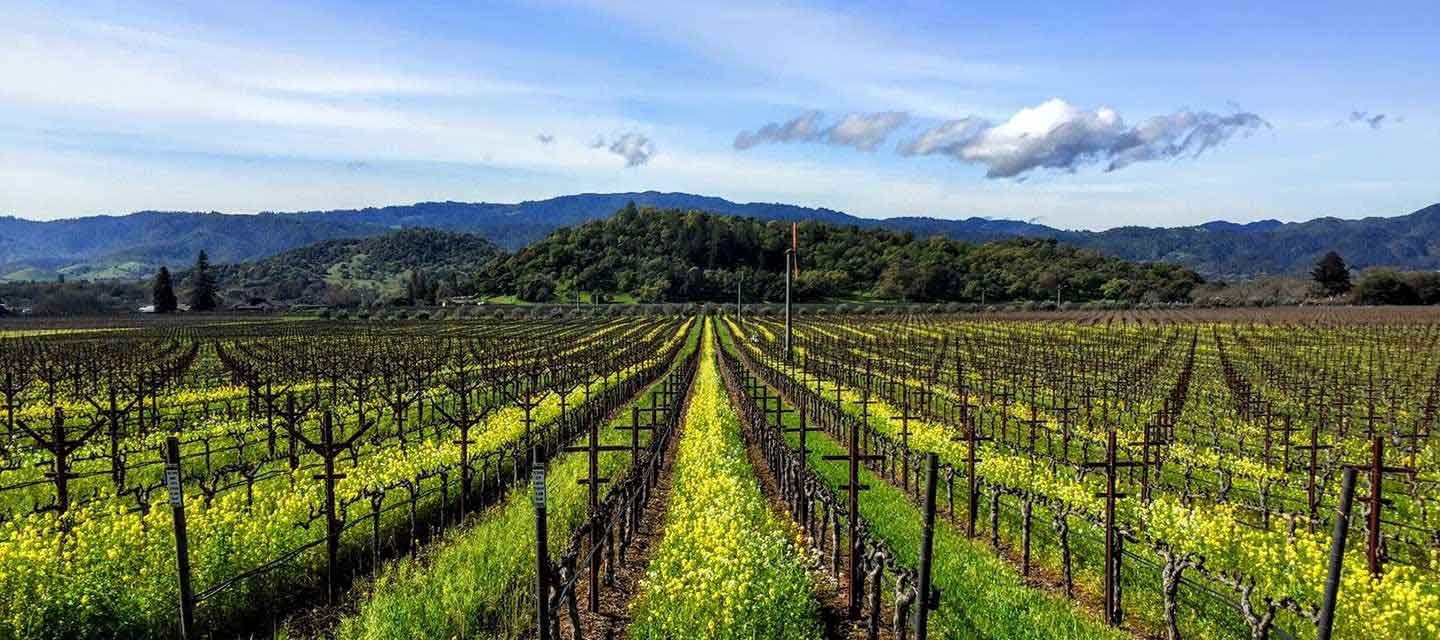 Duckhorn Rector Creek Vineyard Feature Image